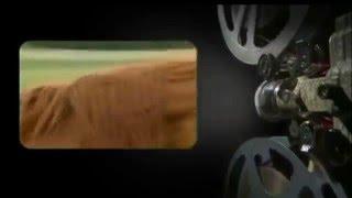 Akcent - Siwy Koniu 2016 (Teledysk od Fana - chrismedia2009)