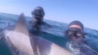Spearfishing grouper off sharks:  SAI 4-diver safety protocol