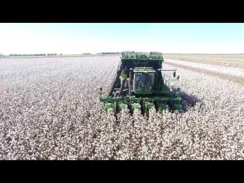 Woodvale Cotton Picking 2017