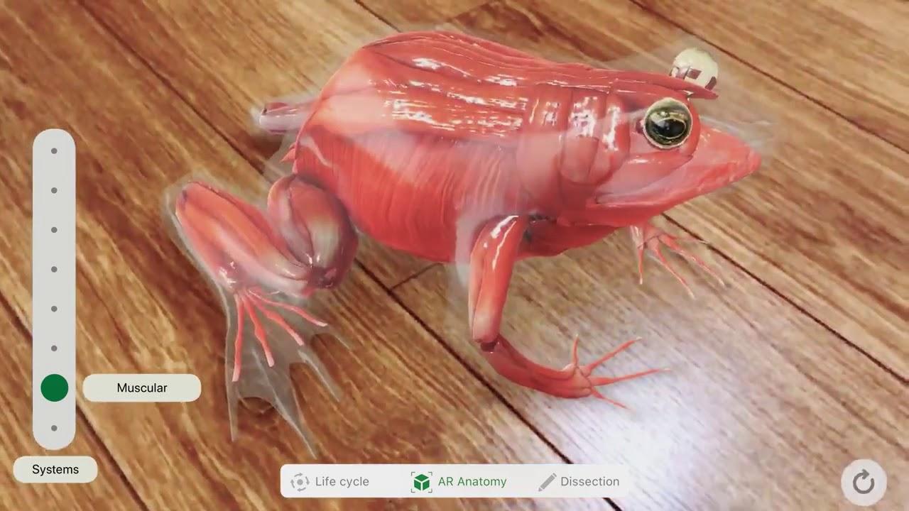 Froggipedia: realidad