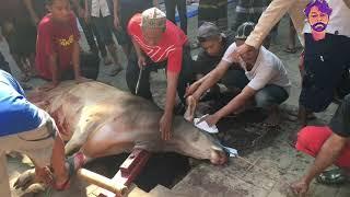 penyembelihan hewan kurban pada hari raya idul adha 2020/1441 H,