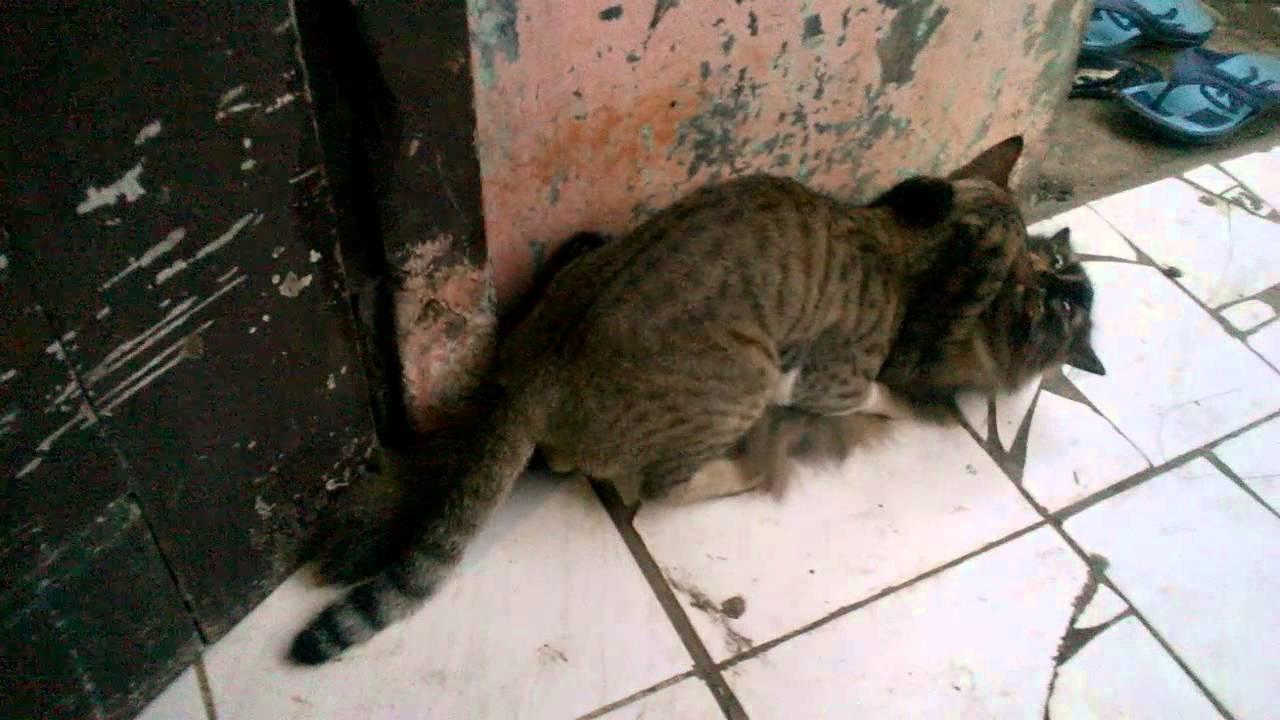 XXX CAT in action - YouTube