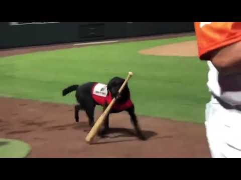 The Mo & Sally Show - Umpire Gets Booed After He Doesn't Let Bat Dog Retrieve A Bat