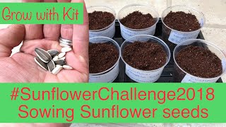 Baixar #SunflowerChallenge2018 - Sowing Mongolian Giant & Giant single