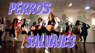 ZUMBA-Perros Salvajes (Daddy Yankee)...*Istruttrice e coreografa LAURA MESI