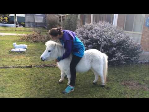 Miniature Pony Ride