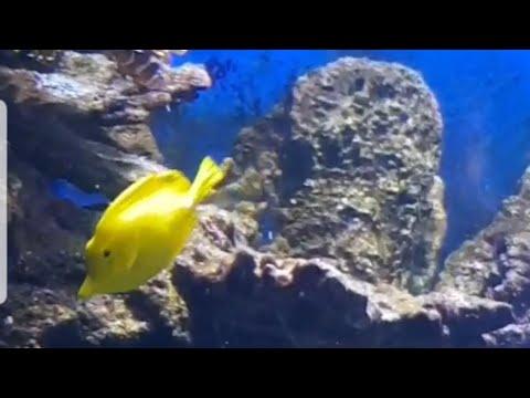 أروع أنواع الأسماك 🐋 🐳 L'aquarium BARCELONA 🐬 سبحان الخالق