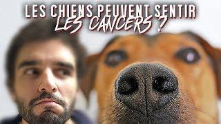 LES CHIENS PEUVENT SENTIR LES CANCERS ? Vrai ou Faux #82