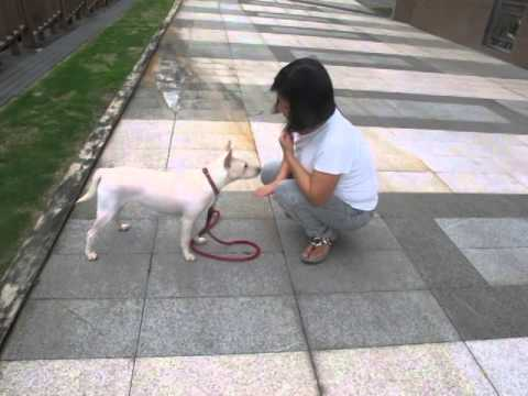 Lillian's Dog-Snow Playing With A Stranger Lady