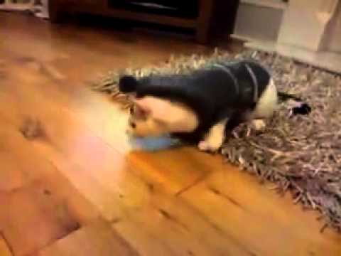 cat in clothes falling over youtube