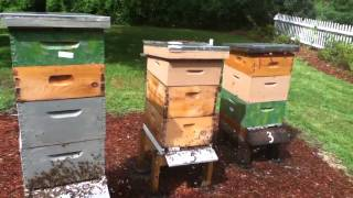 Bee Mine Apiary