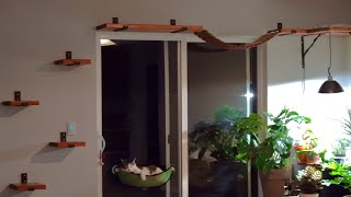 Adding a suspension bridge and corner nook to cat shelves
