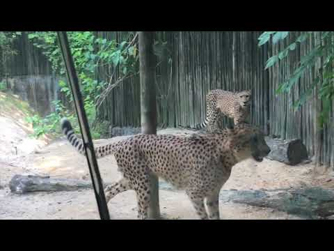 Singapore Zoo 新加坡动物园