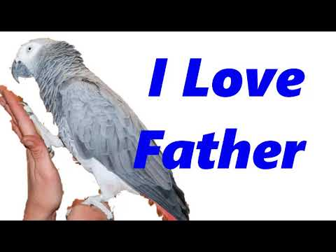 """"""" i love father"""" how to teach bird talk, parrot and budgie speed talking training 1 hours"""