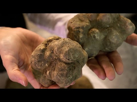 how to become a truffle dealer