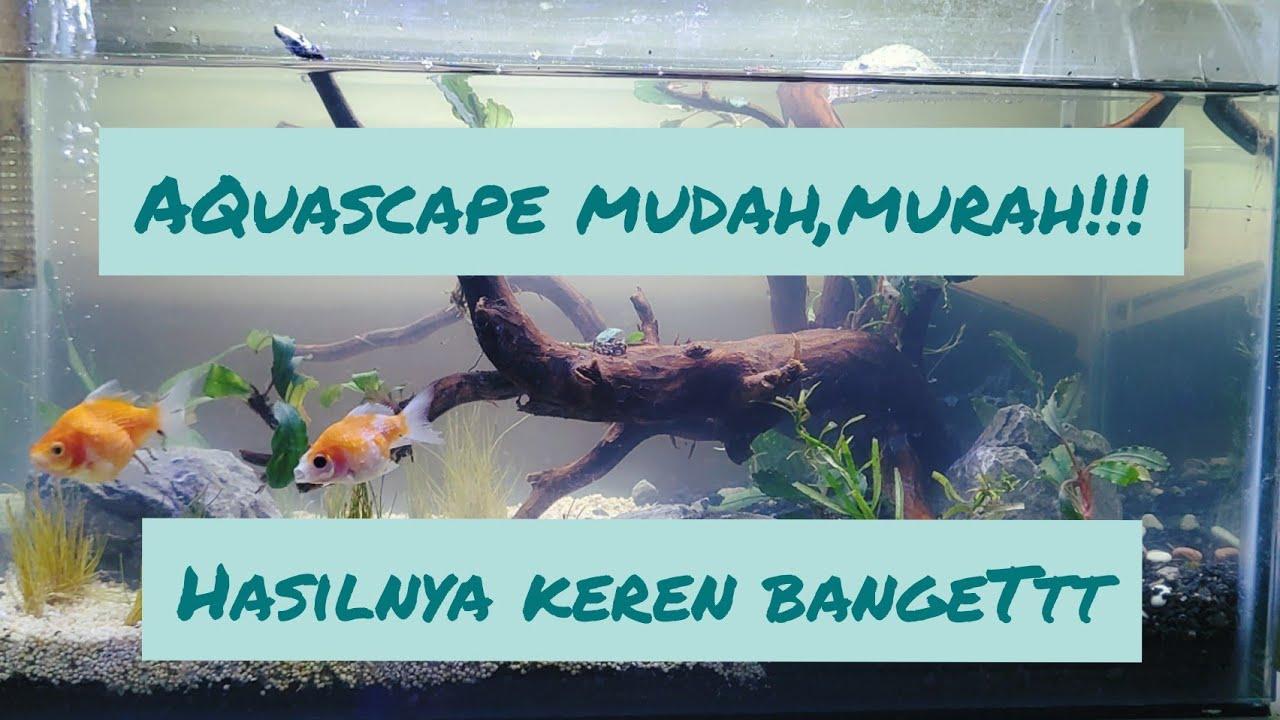 cara membuat aquascape yang mudah untuk pemula!! - YouTube