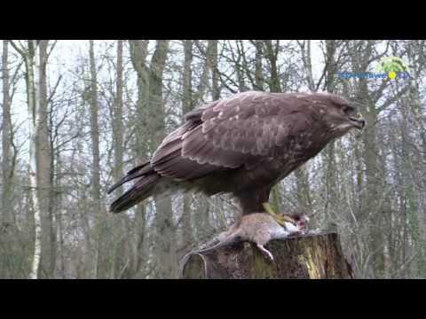 Vogelaar Nico de Haan in Hattem, deel 2