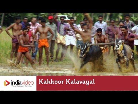 Kakkoor Kalavayal - the bull racing