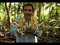 British Indian Ocean Territory – coconut crabs