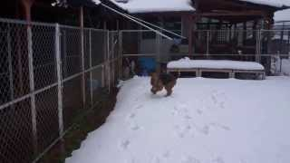 英ちゃん、初めての雪.