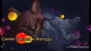 Топ 10 известных пар котов-воителей