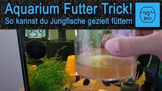 Lebendfutter Trick! Artemia selber züchten und füttern! Lebendfutter selber machen! Aquariumfutter!