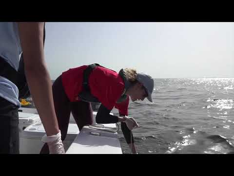 Red Tide Monitoring Offshore Sampling