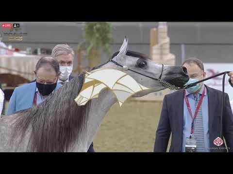 23rd Qatar Nationals   Class 3D