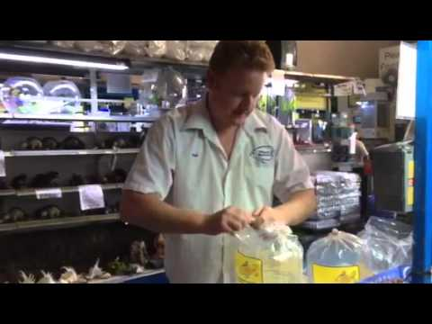 Paul Talbot showing you how to transport live fish