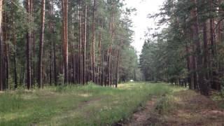 """Новосибирская область, поселок """"Спирино"""""""