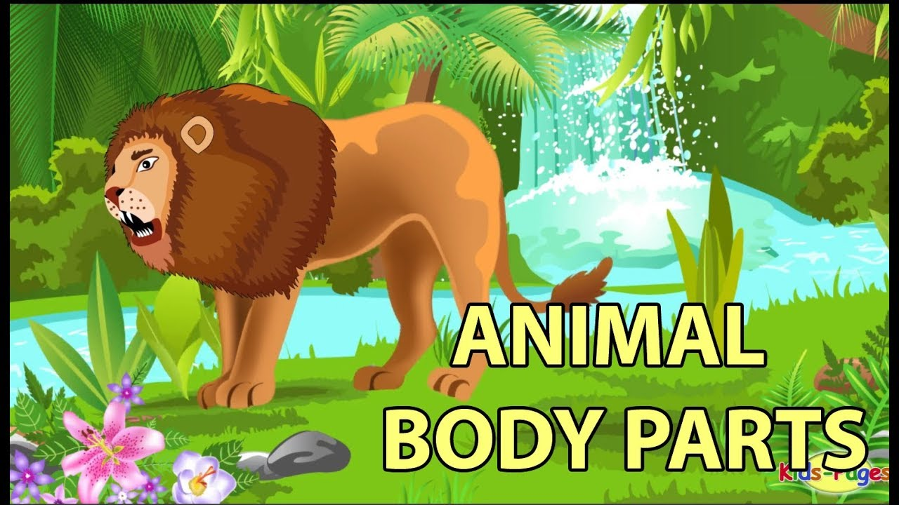 hight resolution of Learn the Animal Body Parts - YouTube