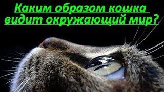 КАКИМ ОБРАЗОМ КОШКА ВИДИТ ОКРУЖАЮЩИЙ МИР  HOW A CAT TO SEE THE WORLD