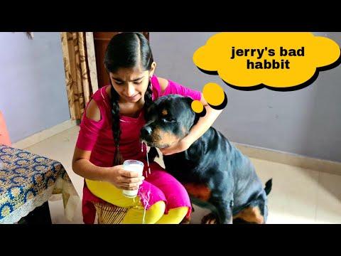 My dog broke a glass of milk||funny dog videos||rottweiler dog.