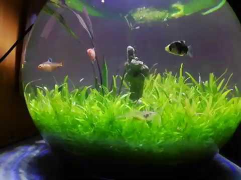 Fish Bowl Aquarium Ideas.10 Galoon
