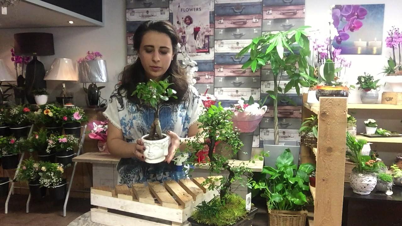Bonsai Boom Verzorgen : Vlog 7: bonsai boom verzorging youtube