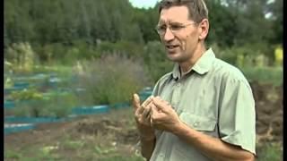 видео Огуречная трава
