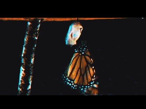 Polaris - REGRESS [Official Music Video]