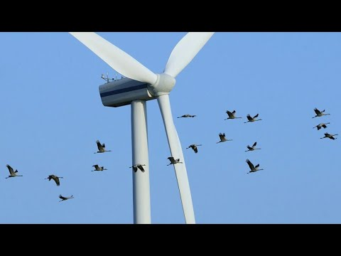 How Do Horizontal Axis Wind Turbines Work?