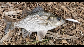 My Favourite Lures For Australian Bass Estuary Perch and Redfin English Perch