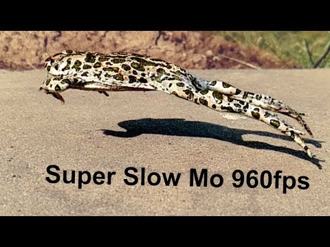 Samsung Galaxy S9 | S9+ slow motion video Jumping FROG