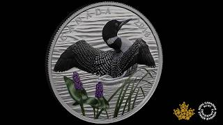 Pure Silver Coin - The Common Loon: Beauty and Grace | Royal C…
