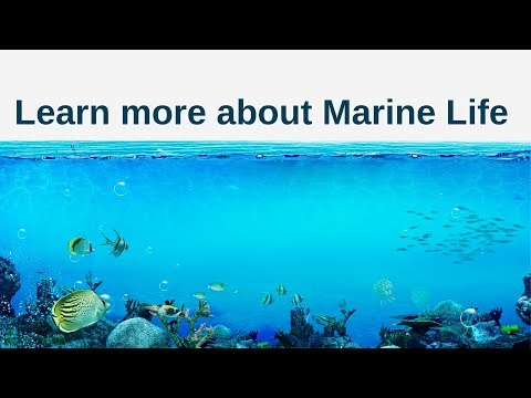 Sea Turtle- Learn more about Marine Life