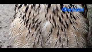 Хищные птицы Придунавья