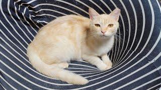 [고양이] 그리고 마늘까기 #7