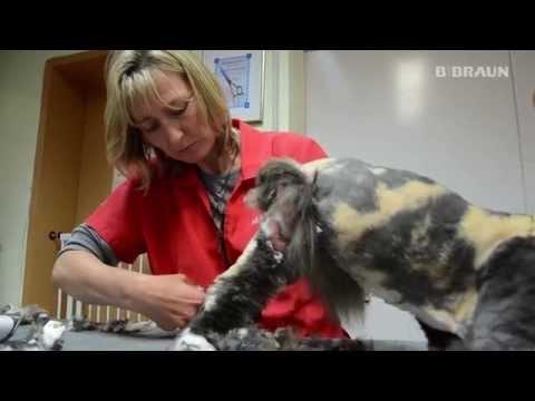 Aesculap Schermaschinen im Test: Katzenschur ( verfilztes Fell )