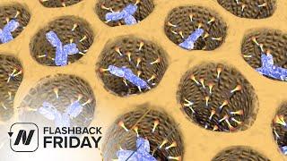 Flashback Friday: Why Do Plant-Based Diets Help Rheumatoid Arthritis?