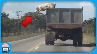 5 verrückte Momente von Tieren auf Kamera aufgenommen