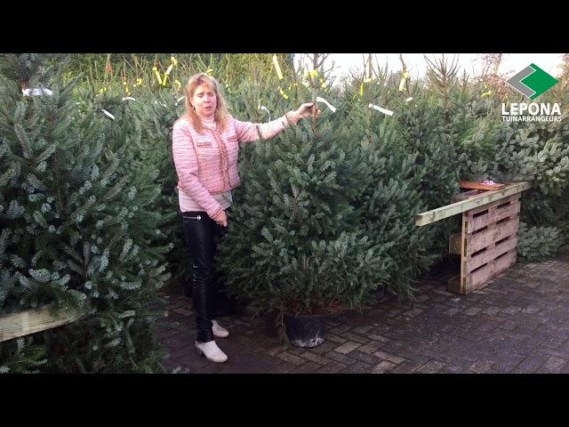 Hoe kies je de perfecte kerstboom? +  Kerstboomverzorging | Lepona Tuinarrangeurs