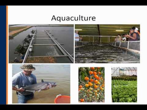 School Of Fisheries, Aquaculture And Aquatic Sciences