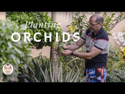 Orchid Garden in Cebu Philippines